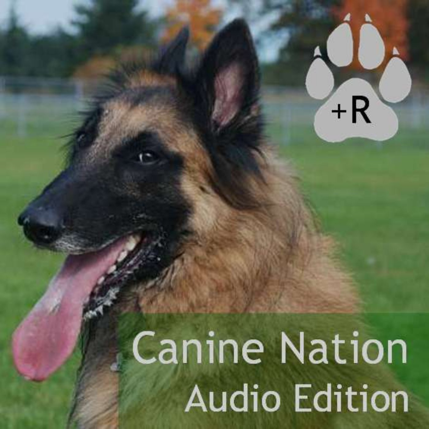 Canine Nation